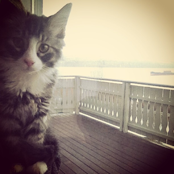 Oscar sitter i vinduet i huset vårt. Som dere kan se i bakgrunnen ---> UTSIKT!!!